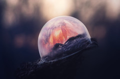 Frozen (Pásztor András) Tags: frozen cold winter bubble ice crystal sunset bokeh wood yellow orange blue macro detailed fine art nature dslr nikon d5100 sigma 70300mm hungary andras pasztor photography