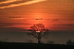 Dawn Chorus (ianbonnell) Tags: billinge billingehill merseyside lancashire sthelens rainford crank england uk landscape countryside rural dawn