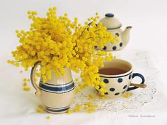 Qui veut du thé ? ....... au mimosa ! (Hélène Quintaine) Tags: mimosa fleur thé tasse pichet composition création nappe broderie jaune février 2017 théière pois rayure écru bleu céramique vase bouquet naturemorte boule