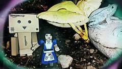 Oooo...Magic mushrooms! (karmenbizet73) Tags: art mushrooms toys photography flickr toystory alice magic fairytales aliceinwonderland eyespy danbo 157365 danboard photodevelopment danbolove toysunderthebed danboandalice 2015365photos