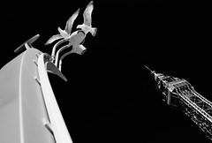. . . blackpoolgulls (orangecapri) Tags: blackandwhite white black birds architecture contrast lights mono gulls minimalism blackpool minimalist blackpooltower hss sliderssunday orangecapri
