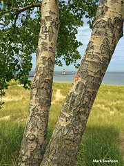Plenty of initials carved in these trees (mswan777) Tags: blue trees summer lake green beach apple nature grass sand michigan dunes great lakes scenic carving initials iphoneography iphone6