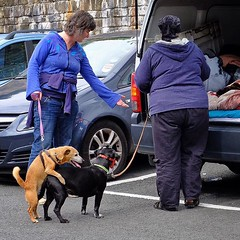 Hebden Bridge: It's That Sort of... (thephilosopherstoned) Tags: flowers pets dogs hippies candid yorkshire streetphotography documentary abandon relaxed flowerpower easygoing laidback hebdenbridge copulation doggiestyle growingwild documentaryphotography freespirits uploaded:by=flickstagram instagram:photo=1044252043774194703311672236