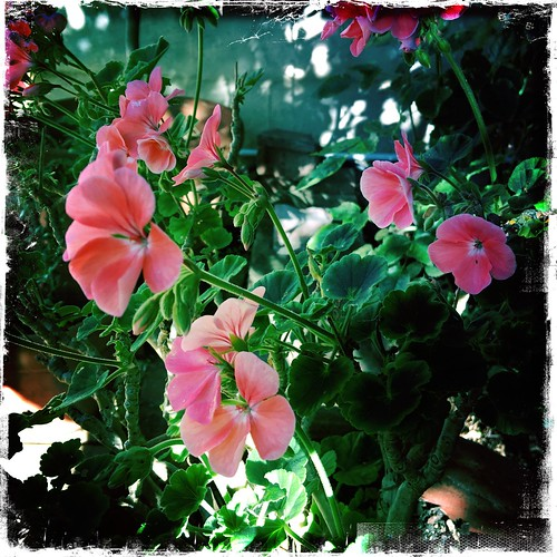 Pink and Green: In the Garden