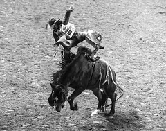 024693648-83-2016 NFR Cowboy Riding Saddle Bronc Riding-6-black and white (Jim There's things half in shadow and in light) Tags: 2016 canon5dmarkiv canon70200lens lasvegas nationalfinals nevada rodeo thomasandmack unlv action animal cowboy december sports saddlebronc blackandwhite america horse