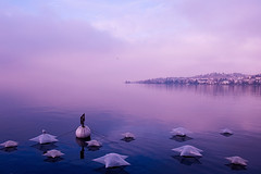 Montreux Lake (eleonoralbasi) Tags: montreux switzerland travel lake lakescape landscape view beautiful romance colors blue sunset canon6d stars winter atmosphere