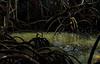 Mangroves (*Millie* (Catching up slowly)) Tags: reflections water lighttrails mangrove manglar sea shrubs trees coastal vegetation tropical amateurphotography nature canon rebelt6i eos lightandshadow interesting outdoors boqueron pr