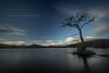 Sticky (RusseII Lees) Tags: milarrochybay tree winter balmaha loch lomond le 2017
