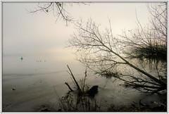 Uferlandschaft II