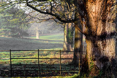 1612_untitled_12489.jpg (neil955) Tags: christshospital nikond7200 nikon1685 landscape fields