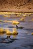 IMG_3656 (FelipeDiazCelery) Tags: sanpedro sanpedroatacama sanpedrodeatacama desierto altiplano atacama andes chile fauna aves valledelaluna