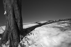 Winterreise - Erstarrung (memories-in-motion) Tags: minimalism winter winterreise erstarrung cold kälte schnee shadow light baum stamm contrast schubert leica leicaq composition landscape photography nature natur outdoor bayern germany dorfen