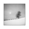 Winter feelings (cardijo) Tags: austria österreich salzburg landscape landschaft tree baum snow schnee sun sonne fence winter analog film ilford fp4 rodinal rolleiflex tessar carlzeiss nikon coolscan monochrome