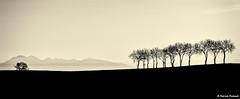 Les arbres du Lauragais (ppichard) Tags: lauragais nailloux