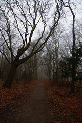 Elswout (han&tanja) Tags: forest fog track elswout overveen thenetherlands estate nature nationalpark nationaalparkzuidkennemerland staatsbosbeheer sbb landscape noordholland tree winter