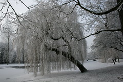 winter wonderland (hjvandervegt) Tags: 2017 nederland netherlands holland kampen overijssel winter landschap landscape snow sneeuw wit white tree boom