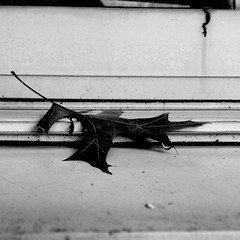January Window -5/100 (Firery Broome) Tags: architecture window windowsill windowframe leaf raindrop drip nature cellphone phonephoto iphone iphone5s iphoneography phoneography apps contrast blackandwhite blackwhite bw highcontrast monochrome naturelovers sadnature windowwednesdays 100x2017 100xthe2017edition image5100 minimalism square squarenature dof closeup faded withered driedleaf autumnleaf winter 365