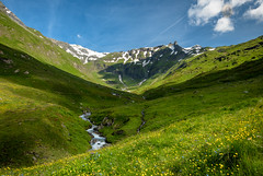 Alpenblumen... (A.K_Photography Hamburg) Tags: mountains nature landscape sommer krnten berge alpen alpenblumen nationalparkhohetauern glocknergruppe nikond810 grossglocknerhochalpenstrase afsnikkor24mm114ged