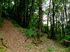 Left or right? (robjvale) Tags: trees brown green nature leaves forest walking climb flat mud path walk hill right trail paths choice left steep