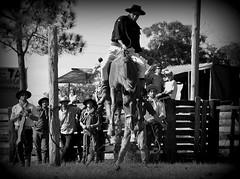 Pateando alto (Eduardo Amorim) Tags: brazil horses horse southamerica brasil criollo caballo cheval caballos cavalos pelotas pferde cavalli cavallo cavalo gauchos pferd riograndedosul pampa hest hevonen campanha brsil chevaux gaucho  amricadosul fronteira hst gacho  amriquedusud  gachos  sudamrica suramrica amricadelsur  sdamerika crioulo caballoscriollos criollos jineteada   costadoce americadelsud gineteada  crioulos cavalocrioulo americameridionale caballocriollo eduardoamorim cavaloscrioulos