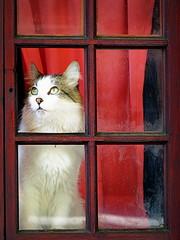 5/6 to give me a beautiful moment ... (Raul Jaso) Tags: windows cats window cat ventana chats gatos finestra ventanas gato gata felinos felino fz finestre gatas leschats fz150 panasonicfzseries panasonicfz150 rauljaso rauljasofotografia rauljasophotography