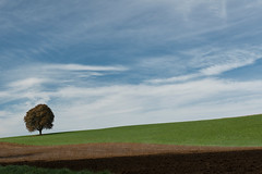 """The Return of The Tree - September 2015"" (helmet13) Tags: d800e raw landscape thetree chestnut tree greenmeadow meadow field sky clouds silence peaceful latesummer nature agriculture aoi heartaward peaceaward world100f platinumheartaward 200faves minimalismus simplicity"