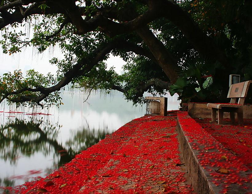 lộc vừng tuyệt đẹp tại Hà Nội