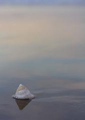 Macro Monday - Triangle (xanthosia) Tags: ocean sunset sea beach triangles shell australia macromonday