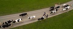 La dsalpe grurienne en vue arienne (Pierre Schwaller (lyoba.ch)) Tags: suisse tradition agriculture drone gruyre piller phantom3 troupeau dji lacdelagruyre schwaller lyoba pontlaville pierreschwaller lyobach