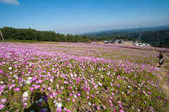 20151018-DS7_5971.jpg (d3_plus) Tags: street morning sky flower nature japan nikon scenery wideangle daily bloom 日本 streetphoto toyama 花 自然 空 dailyphoto thesedays superwideangle flowergarden 景色 畑 川 朝 日常 鉄道 路上 tamron1735 富山 広角 a05 ストリート ニコン 富山県 花畑 tamronspaf1735mmf284dildasphericalif tamronspaf1735mmf284dildaspherical toyamapref d700 超広角 nikond700 tamronspaf1735mmf284dild tamronspaf1735mmf284 路上写真
