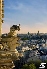 Chimre (A.G. Photographe) Tags: paris france french nikon europe notredame cathdrale ag capitale nikkor chimre glise franais gargouille parisian anto quasimodo xiii parisien d810 antoxiii 70200vrii agphotographe