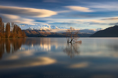 Still Here, Stilled Heart (Jim Patterson Photography) Tags: longexposure morning autumn newzealand lake snow mountains nature clouds sunrise reflections landscape fallcolor southisland lakewanaka willowtree goldenlight jimpattersonphotography jimpattersonphotographycom seatosummitworkshops seatosummitworkshopscom