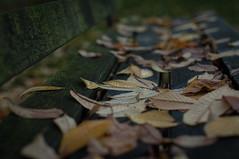 Depth of.....Foliage? (EXPLORED) (Katrina Wright) Tags: leaves fall autumn bench damp mold mildew park explored dsc9879