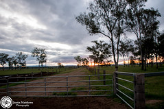 Down on the farm (aussiecattlekid) Tags: sunset holstein dairyfarm friesian brownswiss holsteinfriesian