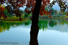 Jheel Park Taxila Cantt (KASHIF_AFRIDI) Tags: park autumn red photography leafs kashif taxila cantt afridi jheel jheelpark