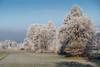 A9900860_s (AndiP66) Tags: winterstimmung altbüron melchnau luzernerhinterland rottal kanton luzern cantonoflucerne bern cantonofberne winter nebel fog mist gefroren reif frosted frozen hoarfrost sun sonne sunrays sonnenstrahlen sony sonyalpha 99markii 99ii 99m2 a99ii alpha ilca99m2 slta99ii sigma24105mmf4dghsmart sigma 24105mm f4 amount andreaspeters