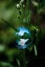selfie 80 lvl (kirpichman) Tags: selfie selfportrait soapbubble fisheye reflextion sphere grass bubble