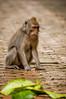 monkey (Sam Scholes) Tags: sangehmonkeyforest badungregency purabukitsari hinduism hindu travel bukitsaritemple bali palaforest sangeh holymonkeyforest vacation indonesia denpasar moneyforest abiansemal id