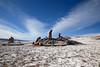 IMG_3657 (FelipeDiazCelery) Tags: sanpedro sanpedroatacama sanpedrodeatacama desierto altiplano atacama andes chile fauna aves valledelaluna