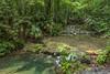 47. Around Palenque, Chiapas, Mexico-15.jpg (gaillard.galopere) Tags: 06000000 06006000 06006006 america amérique chiapas couleur environnement gaillardgalopere iptcsubjects mex mx mexico mexique palenque ressourcesnaturelles rivières travel vegetations voyage water agua arboles arbre arbres bright brillant brillante claro color colorful coloré eau environmentalissue forest foret green landscape landscapephotography loverlander lustroso naturalresources outdoor outdoorphotography overland overlanding paysage river rivers tree trees verde vert wood