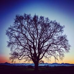 Mein Allgäu (Instagram Version) (edelweisskoenig) Tags: eu europe europa germany deutschland bavaria bayern allgäu fujifilm fujinon xpro1 23mm 23mmf2 tree baum sky himmel mountains berge countryside landschaft sun sunset sonne sonnenuntergang blue blau plant pflanze