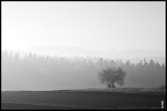 the fool on the hill (alamond) Tags: tree favorite fog mist morning light back bw blackandwhite monochrome canon 7d markii mkii llens ef 70300 f456 l is usm alamond brane zalar