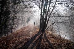 La Promeneuse du Jour de l'An (Clydomatic) Tags: chemin canal promeneuse silhouette arbres hiver contrejour ombres
