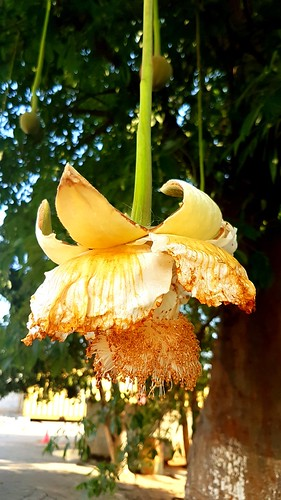 Flowers from all over the world - Luanda - Angola