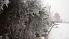 2017-01-10_12-55-43 (marinarafaelian) Tags: winter snow white branch armenianchurch yerevan
