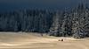 Into the Storm (Pawel A K) Tags: theworldthroughourlenses 2016 poland tatras snow koscielisko forest storm husky sledge ♡
