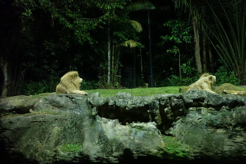 Night Zoo Safari (2)