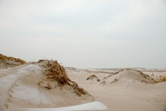 On the beach, Slag Vlugtenburg (F.d.W.) Tags: duin duinen dune dunes frost nature natuur sand sea slag slagvlugtenburg vlugtenburg zand zee httpsenwikipediaorgwiki27sgravenzande fdw fransdewit corel aftershot corelaftershot canon canon7d mk2 mkii canon7dmk2 canon7dmkii canoneos7d canoneos7dmkii canoneos7dmk2 eos7d eos7dmkii eos7dmk2 wwwflickrcomphotosfransdewit kust coast strand beach landscape landschap dutch netherlands nederland holland europe europa eec eeg