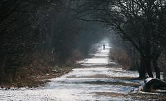 Jan 21: Winter Walk on Frost Trail (johan.pipet) Tags: flickr nature walk trek winter zima chodník path trail snow sneh trees bratislava devinska nova ves slovakia slovensko palo bartos bartoš canon eu europe