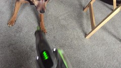 Cleaning help (Ed Whiting) Tags: hoovering housework dog
